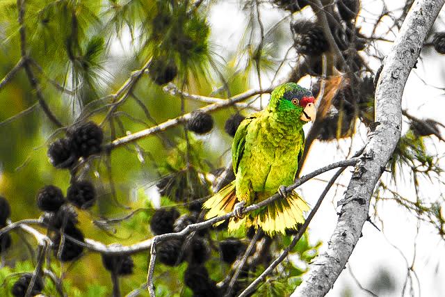 parrots-3 (1 of 1)