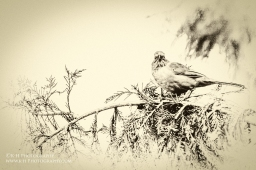 ~Vintage Bird~