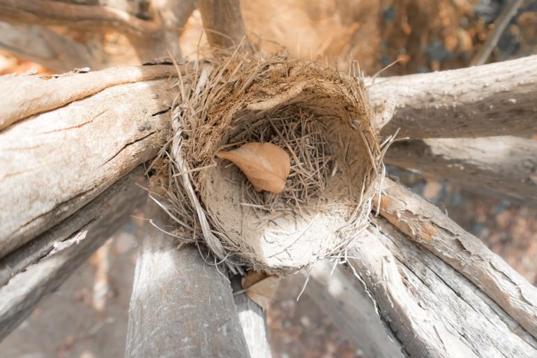 nest10-1-of-1