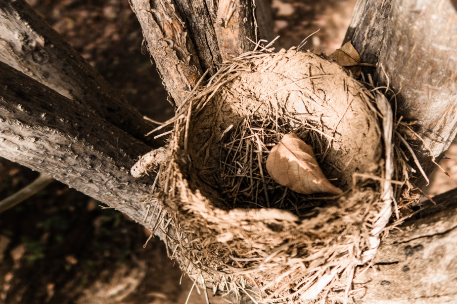 nest3-1-of-1