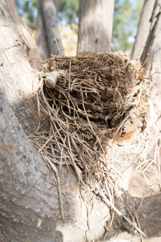 nest9-1-of-1