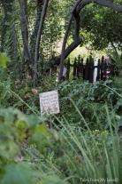 garden1 (1 of 1)