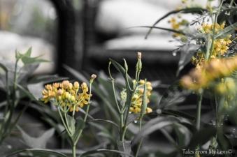 yellow (1 of 1)