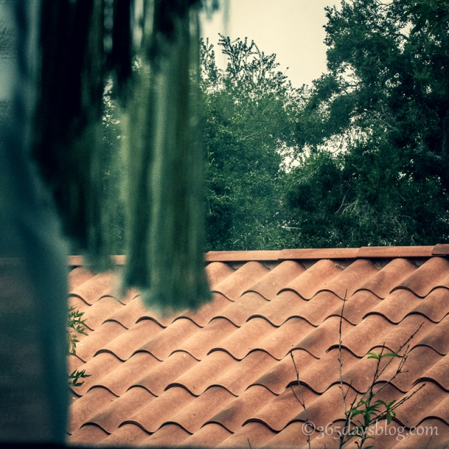 squares-roof2 (1 of 1)
