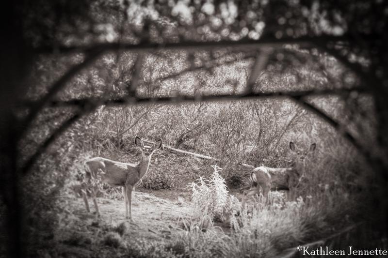 deer9w (1 of 1)