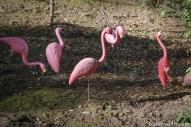 flamingohills (1 of 1)