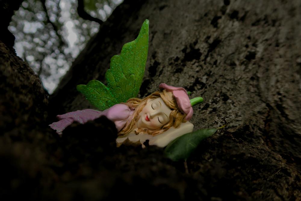 fairy (1 of 1)